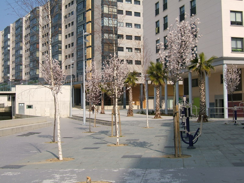 Foto árboles en flor. Autor: Liliana